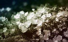 Картинка цветы, лепестки, боке
