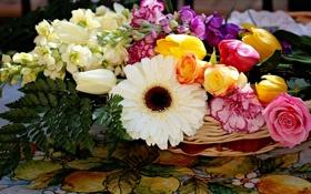 Обои розы, тюльпаны, гербера, гвоздики