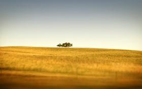 Обои трава, фото, холмы, tilt-shift, поле, дерево, деревья