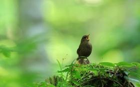 Обои листья, щебетание, клюв, пень, природа, птица, песня