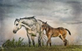 Обои природа, стиль, кони