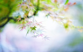 Обои природа, нежный, листва, цвет, ветка