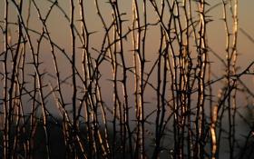 Обои природа, Golden sunrise, солнце, растения, колючки, свет, утро