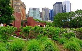 Картинка деревья, город, здания, Нью-Йорк, небоскрёбы, высотки, New-York