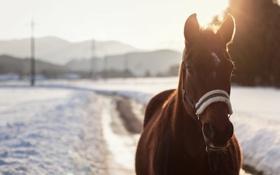 Картинка зима, глаза, снег, конь, лошадь