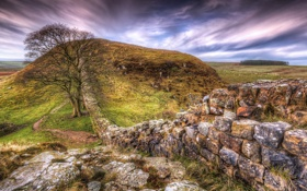 Картинка поле, трава, камни, стена, дерево, тропа, холм