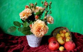 Обои куст, фрукты, натюрморт, яблоко, абрикос, роза, цветок