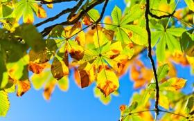 Обои небо, свет, ветки, дерево, листва, Осень