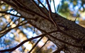 Обои ветки, природа, блики, дерево, ветви, боке