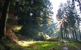 Обои лес, деревья, дорога, лучи солнца, природа, свет