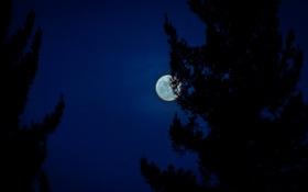 Картинка небо, ночь, луна, силуэты