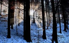 Обои лес, лучи, свет, снег, природа, листва, дервья