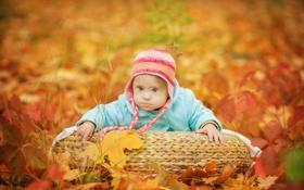 Картинка осень, взгляд, листья, ребёнок, шапочка, младенец, сероглазый