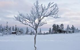 Обои облака, небо, домик, деревце, деревья, мороз, иней