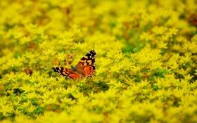 Обои бабочка, зелень, лето