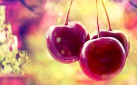 Обои вишня, ягоды, черешня, cherry