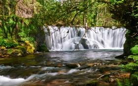 Обои лес, деревья, природа, водопад, поток, forest, trees