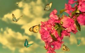 Картинка листья, бабочки, цветы, ветка