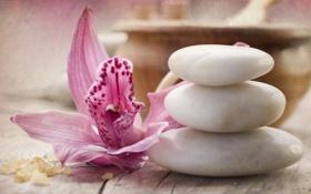 Обои цветок, орхидея, камешки