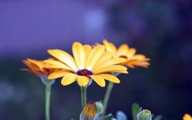 Обои макро, цветы, природа, фото, красота, лепестки, красивые обои