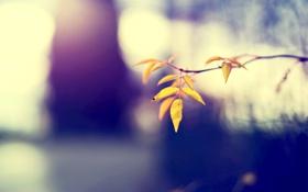 Картинка осень, листья, природа, фокус, ветка, желтые