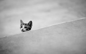 Обои фон, кошка, минимализм