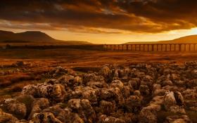 Обои поле, пейзаж, мост