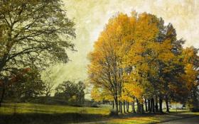 Картинка деревья, город, стиль, улица
