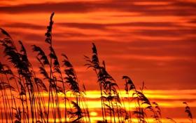 Обои закат, облака, небо, солнце, растение, макро