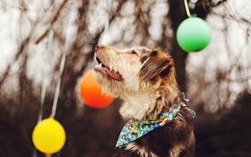 Обои фон, шары, собака