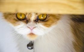 Картинка кот, взгляд, кошак, котяра