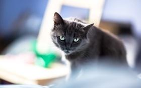 Картинка кот, фон, глаза, взгляд