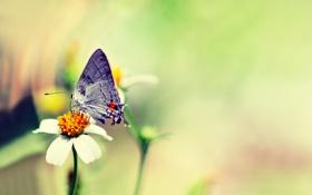 Картинка цветок, бабочка, розмытость