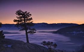 Картинка горы, туман, рассвет, утро, сосна