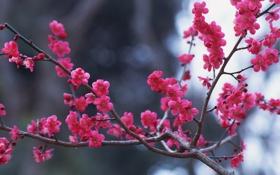 Обои цветочки, ветка, розовое