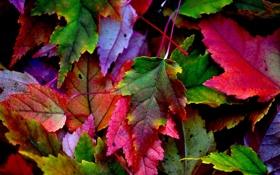 Обои осень, листья, природа, краски, багрянец