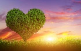 Картинка любовь, закат, дерево, green, сердце, love, heart