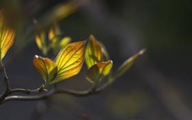 Картинка листья, макро, природа, растения, ветка