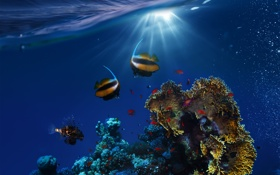 Обои underwater, ocean, fishes, tropical, reef, coral