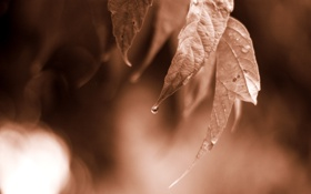Обои природа, макро, листья, фото