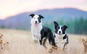 Картинка собаки, фон, друзья