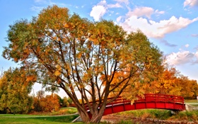 Картинка осень, небо, деревья, мост, парк, ручей