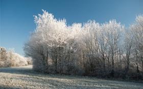 Обои зима, небо, деревья, иний, кусты, winters, cold touch