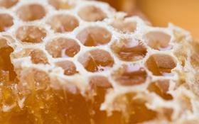 Обои макро, мёд, Sweet Gold
