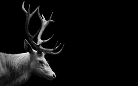 Картинка олень, фон, рога