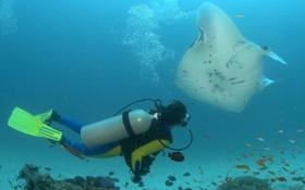 Обои подводный, рыбы, ласты, мир, аквалангист