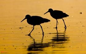 Обои животные, обои, вода, птицы, фото