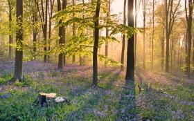 Картинка лес, трава, лучи, свет, деревья, цветы, утро