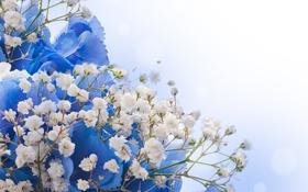 Картинка цветы, white, цветение, blue, blossom, flowers
