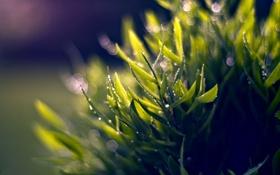 Обои зелень, листья, капли, свет, природа, фон, обои
